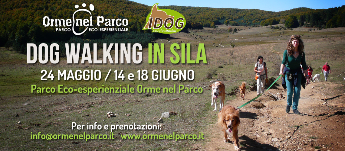 dog walking in sila